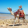 Tourists riding camel on the beach of Egypt. — Stok fotoğraf #23674421