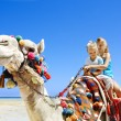Stock Photo: Tourists riding camel on beach of Egypt.