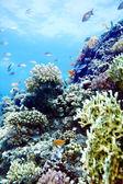 Grupo de agua peces coralinos. — Foto de Stock