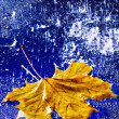 Autumn leaf floating on water with rain. — Stock Photo