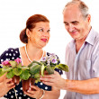 Old couple holding flower. — Stock Photo
