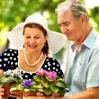 Happy old couple with flower. — Stock Photo