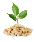 Plant and wood pellets — Stock Photo