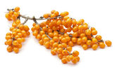 Sea buckthorn — Stock Photo