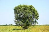 Tree and sky — Stock Photo