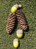 Cones and acorns — ストック写真