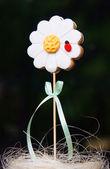 Ladybird on daisy flower — Stock Photo