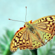 Butterfly — Stock Photo #18009157