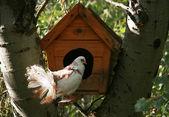 Güvercin yuvası kutusunun yakınında — Stok fotoğraf