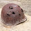 Rusty military helmet — Stock Photo