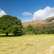 Newly mown hay in Buttermere Lake District — Stock Photo