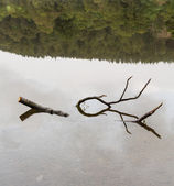 Reflection of branch in Coniston Water — Stock Photo