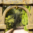 Dew glistening cobweb on gate — Stock Photo