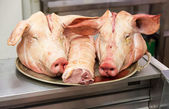 Two pigs heads on tray at butcher shop — Stock Photo