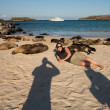 Woman tourist lays among seals on beach — Stock Photo