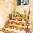 Pots of cacti on old stone steps — Stok fotoğraf