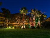 Boże narodzenie światła na palmy — Zdjęcie stockowe