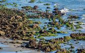 El Matador State Beach California — Stock Photo