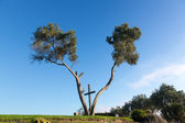Serra Cross in Ventura California between trees — Stock Photo