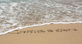 Caribbean written in sand with sea surf — Stock Photo