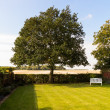 English lawn garden with large tree — Stock Photo