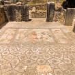Mosaics at Volubilis Morocco — Stock Photo #35442555