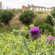 Ruins at Volubilis Morocco — Stock Photo #35442563