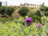 Ruins at Volubilis Morocco — Stock fotografie