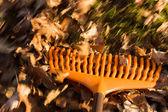 Motion blur on orange lawn rake leaves — Stock Photo