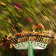 Motion blur on green lawn rake leaves — Stock Photo