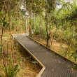 Постер, плакат: Raised walkway through forest in NSW