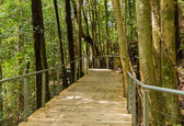 Raised walkway through forest in NSW — Stock Photo