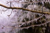 Ice covered branches start to melt to icicles — 图库照片