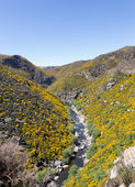 Taieri Gorge railway on side of ravine with bridge — Stock Photo
