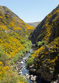 Railway track up Taieri Gorge New Zealand — Foto Stock