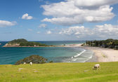 Hike around The Mount at Tauranga in NZ — Stock Photo