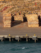Stacks of tree trunks ready for export by sea — Stok fotoğraf