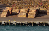 Stacks of tree trunks ready for export by sea — Stock Photo