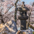 Japanese Lantern at Washington blossoms — Stock Photo #44840579