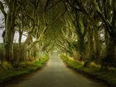 Dark Hedges road through old trees — Stock Photo