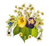 Arrangement of dried pressed flowers against white background — Stock Photo