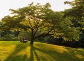 Park bench under flowering dogwood tree — Stock Photo