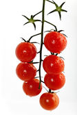 Cherry tomatoes on a branch — Stock Photo