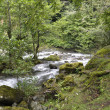 Mountain river, landscapes — Stock Photo #30346215