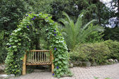 Bench entwined plant — Stock Photo