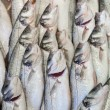Stock Photo: Fresh fish at fish market