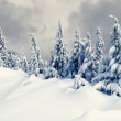 Winter — Stock Photo