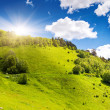 Meadow — Stock Photo #29208265