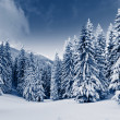 Winter — Stock Photo #29208391