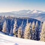 Winter — Stock Photo #29208743